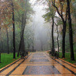 Fog Avenue, Park — Stock Photo