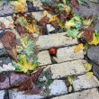 Fall under your feet — Stock Photo #33594873