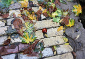 Fall under your feet — Stock Photo