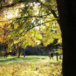 Autumn Park walk — Stock Photo