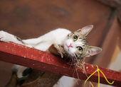Weiße katze mit grauen flecken liegt — Stockfoto