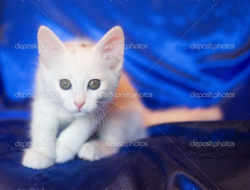 猫咪图片大全可爱壁纸闭着眼睛