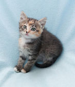 Scared tricolor kitten — Stock Photo