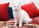 белый кот, сидя на красочные покрывала — Стоковое фото