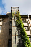 Closed-old elevator shaft with curly green ivy — Stock Photo
