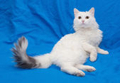 White cat with gray tail and yellow eyes — Stock Photo