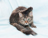 Tri-color green-wash my kitten with cocked back foot — Stock Photo