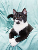 Black and white cat with yellow eyes lying swaggered — Stock Photo
