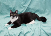 Black and white cat lying on green background — Stock Photo