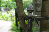 The tree that grew through the cemetery fence — Stock Photo