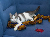 White kitten with gray spots playing with golden Christmas garla — Stock Photo