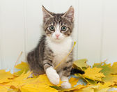 Little scared tabby kitten — Stock Photo