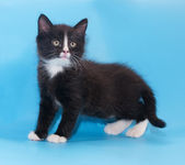 Black and white fluffy kitten worth warily looking up  — Foto de Stock