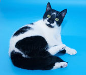 White cat with black spots is looking coquettishly  — 图库照片