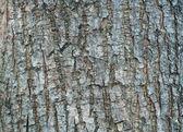 Texture of tree bark  — Stock Photo