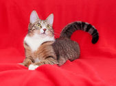 Tabby cat with yellow eyes lying quietly — Stock Photo