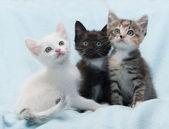 Three multi-colored kitten looking up on blue  — Stock Photo