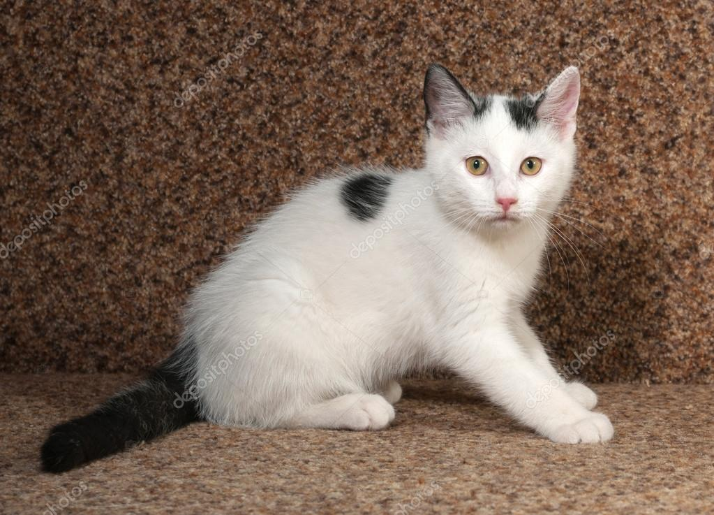White Cat With Black And Brown Spots