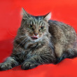 Fluffy tabby cat stuck out her tongue and lying on red  — Stock Photo #51779273