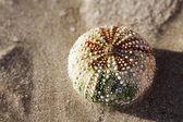 Colored mollusk — Stock Photo