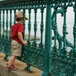 Little boy on a fence - Stock Photo
