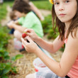 Girl picking strawberries - Stock Photo