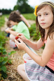 Girl picking strawberries — Stock Photo