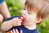 Boy eating a strawberry — Stock Photo
