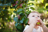 Baby eating an apple — Stock Photo