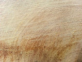 A close up of the cut of a tree — Stock Photo