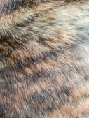 Animal fur, — Stock Photo
