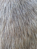 Close up picture on the animal fur, — Zdjęcie stockowe