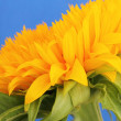 Sunflower — Stock Photo #30443583