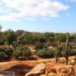 Stock Photo: Cacti at Bontanicactus,Ses Selines, Mallorca, Spain