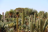 Cacti at Bontanicactus,Ses Selines, Mallorca, Spain — Photo