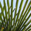 Palm against a blue sky — Stockfoto