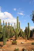 Bontanicactus,Ses Selines, Mallorca, Spain — Stock Photo