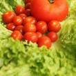 Tomatoes and lettuce — Stock Photo #23944111
