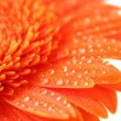 Royalty-Free Stock Photo: Orange flower