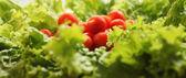 томс на салат — Стоковое фото