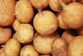 Turnip — Stock Photo
