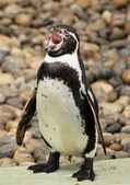 Pinguin — Stock Photo