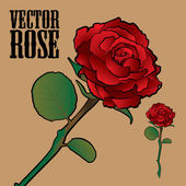 Vector Rose — Stock Vector