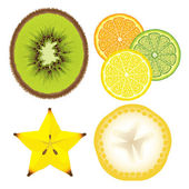Slices of Fruit — Stock Vector