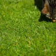 Cat on grass — Stock Photo