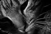 Black & White Cat — Stock Photo