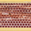 Macro Matchbox Strip — Stock Photo