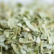 Tarragon — Stock Photo