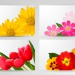 Set of banners with different colorful flower. Vector illustrati — Imagen vectorial