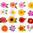 Stock Vector: Big set of beautiful colorful flowers. Vector illustration